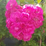 fleurissement_03