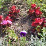 fleurissement_24